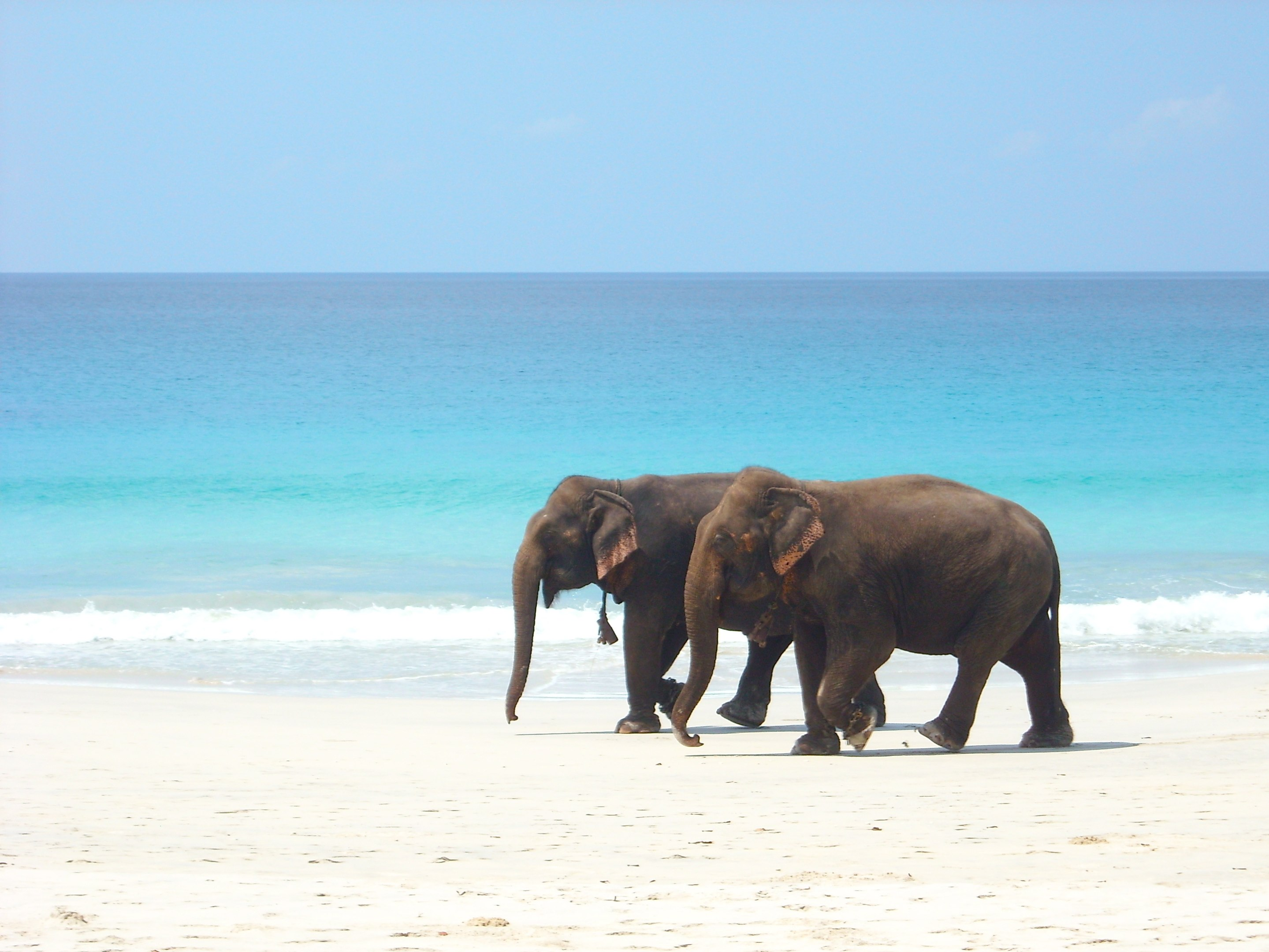 andaman_beach_elephants